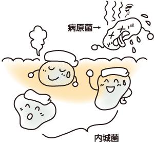 高温で活性化する内城菌イメージ
